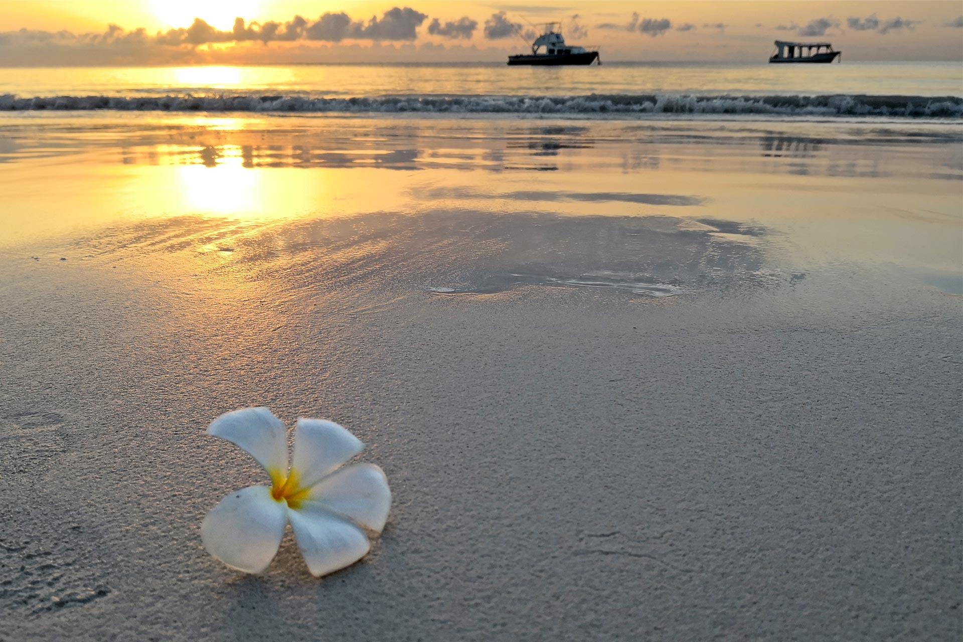 Sejur charter Diani Beach, Kenya, 9 zile - decembrie 2021
