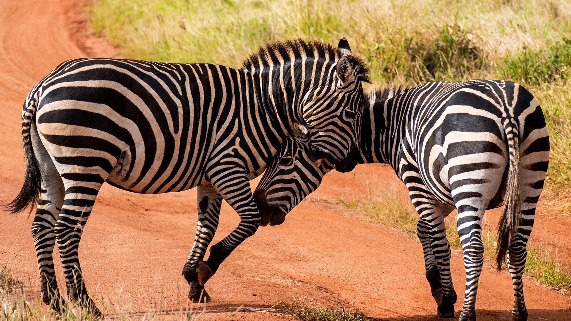 Revelion 2022 - Share a Trip Charter Kenya - Safari Tsavo & plaja Diani Beach, 9 zile