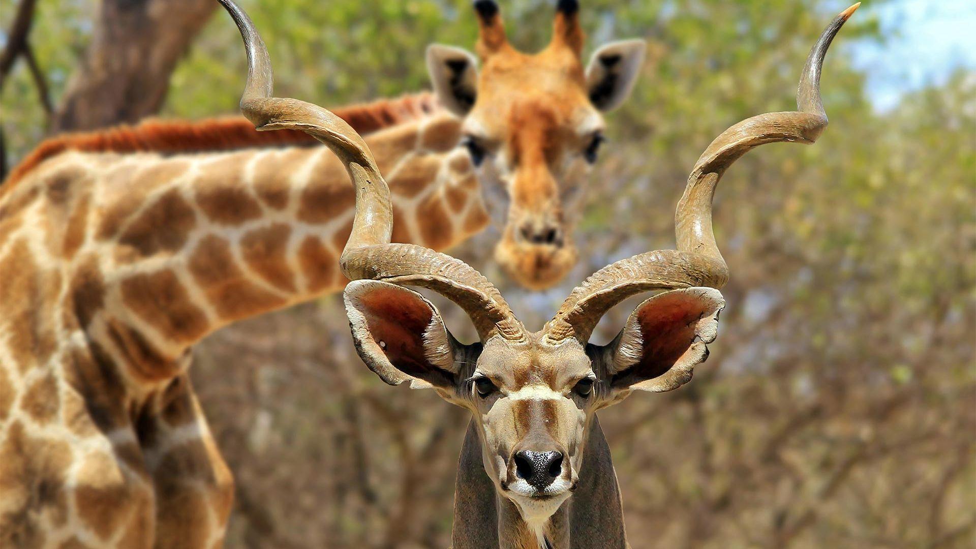 Circuit de grup - Kenya, safari Marea Migratie & plaja Seychelles, 10 zile - august 2021