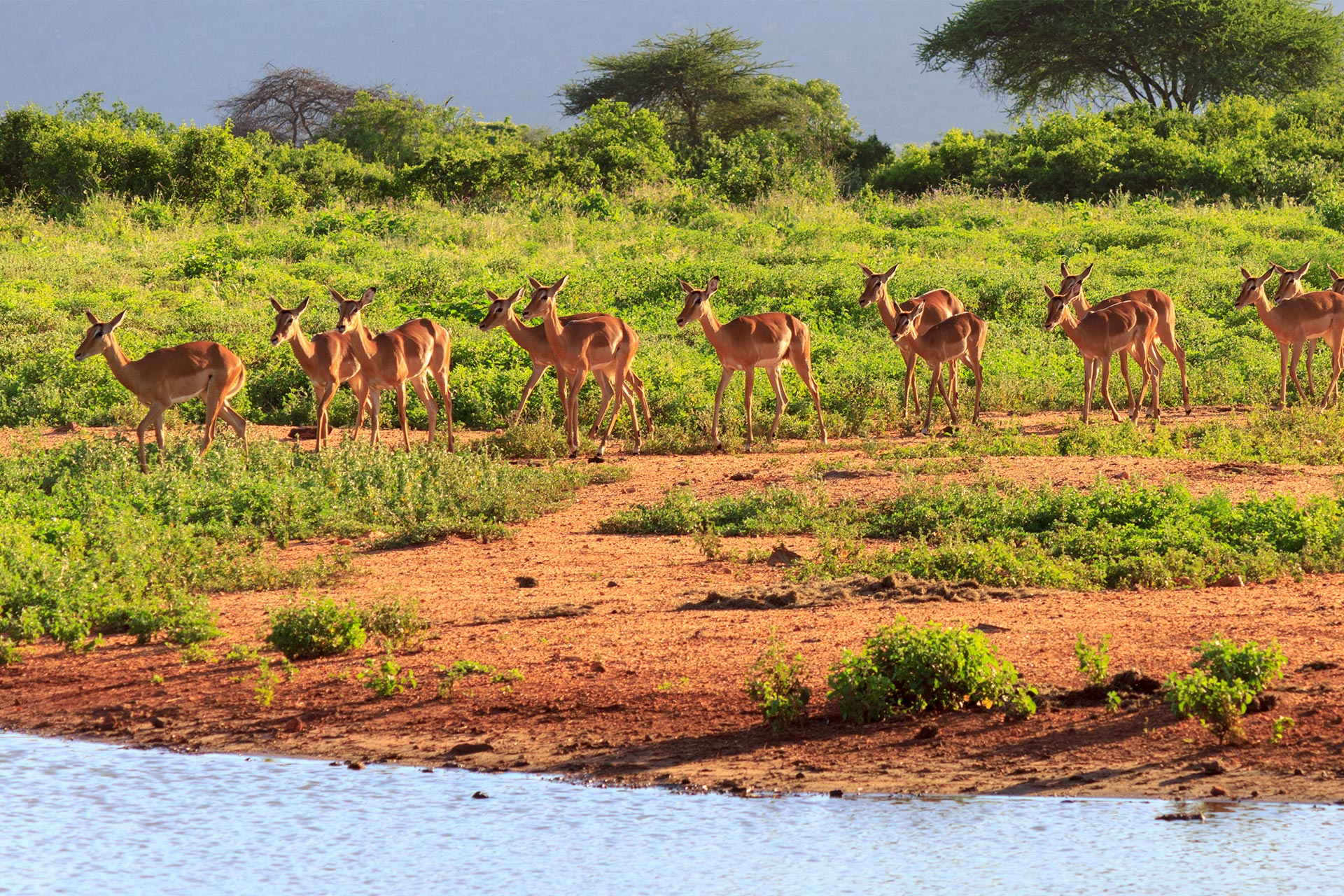 Share a Trip Charter Kenya - Safari Tsavo & plaja Diani Beach, 9 zile - ianuarie 2022