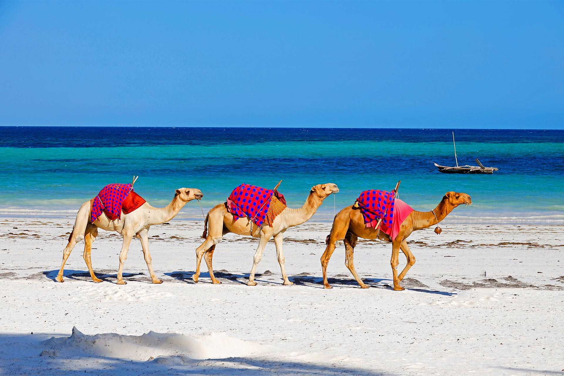 Sejur charter Diani Beach, Kenya, 8 zile - 06 septembrie 2021