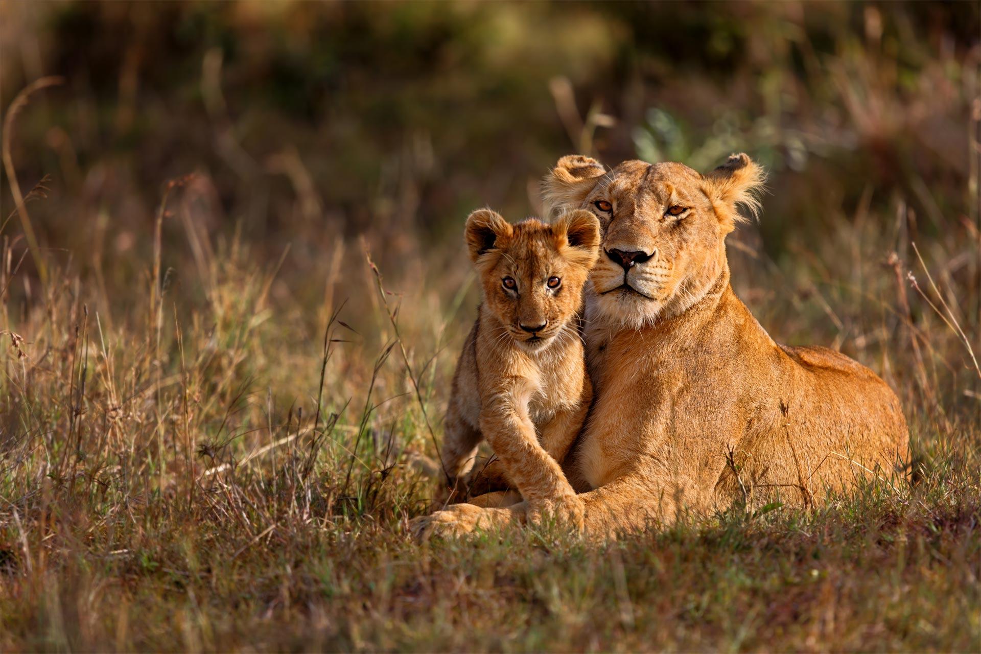 Circuit de grup - Discover Kenya & Tanzania, 12 zile, august 2021