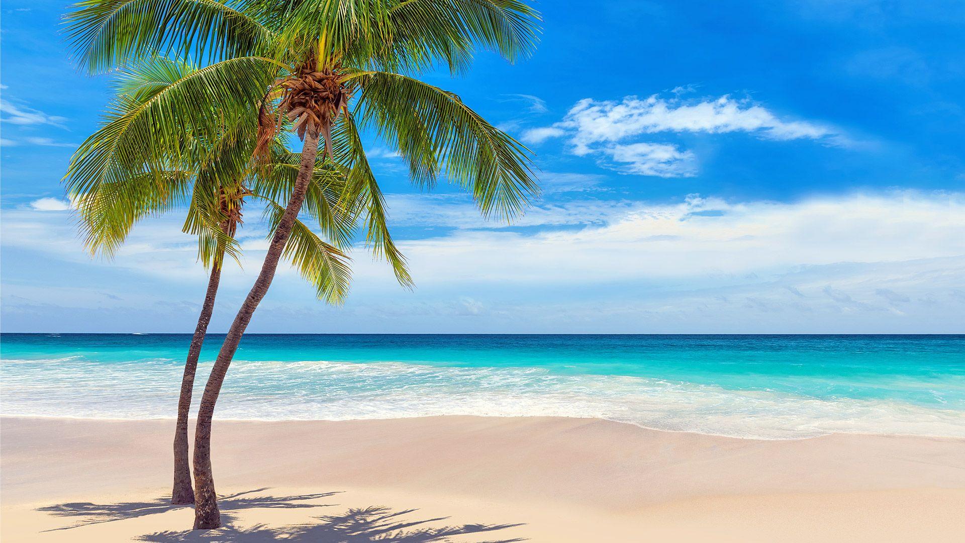 Oferta zilei - Sejur plaja Punta Cana, 9 zile - 22 octombrie 2021