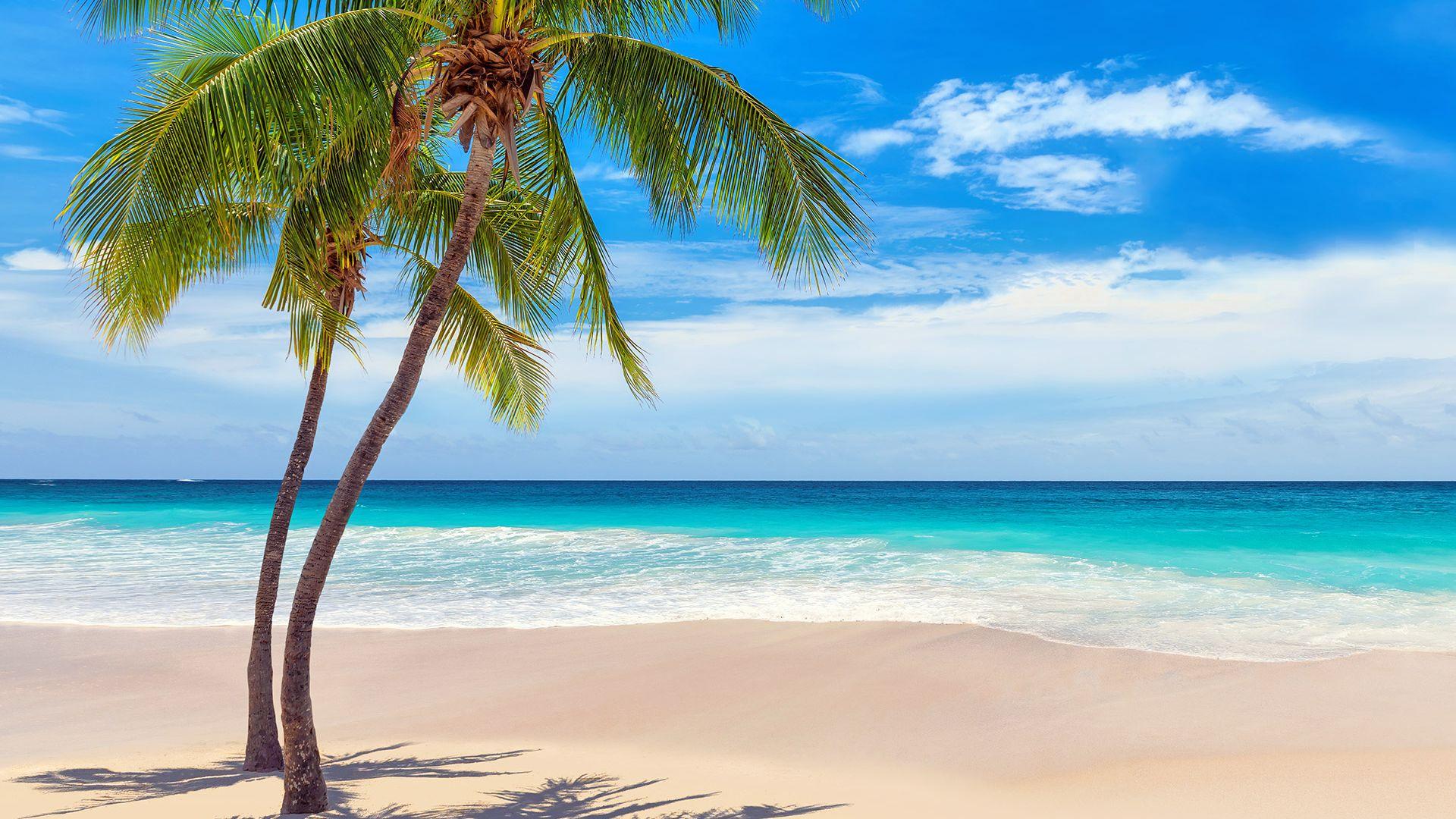 Sejur plaja Punta Cana, Republica Dominicana, 9 zile - 15 august 2021