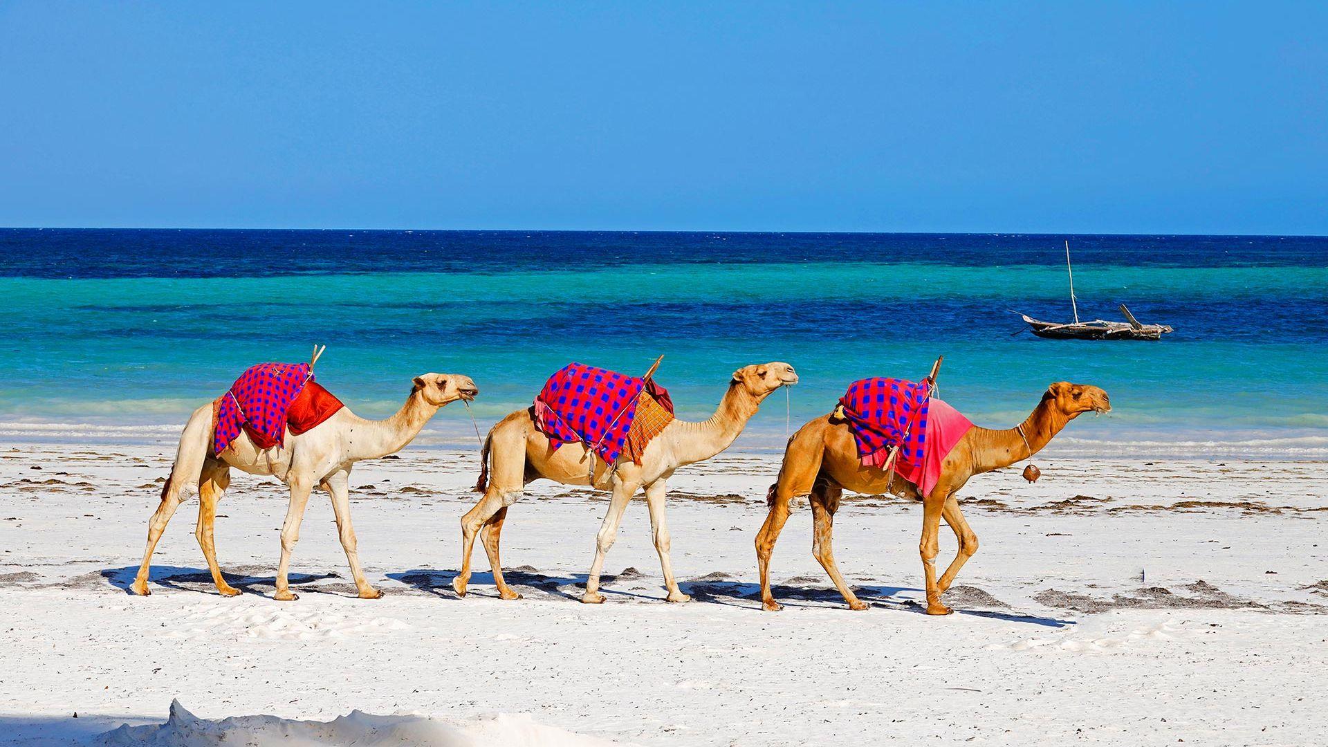 Revelion 2022 - Sejur charter Diani Beach, Kenya, 9 zile