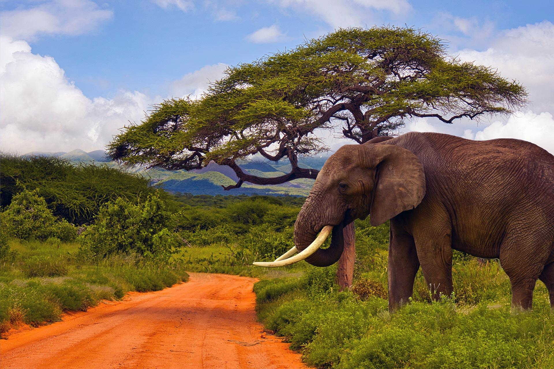 Share a Trip Charter Kenya - Safari Tsavo & plaja Diani Beach, 9 zile - septembrie 2021