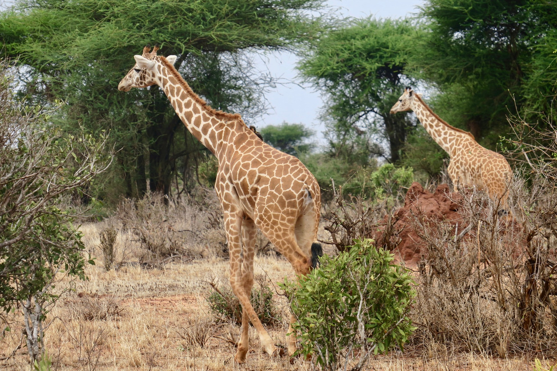 Share a Trip Kenya - Safari Tsavo & plaja Diani Beach, 10 zile