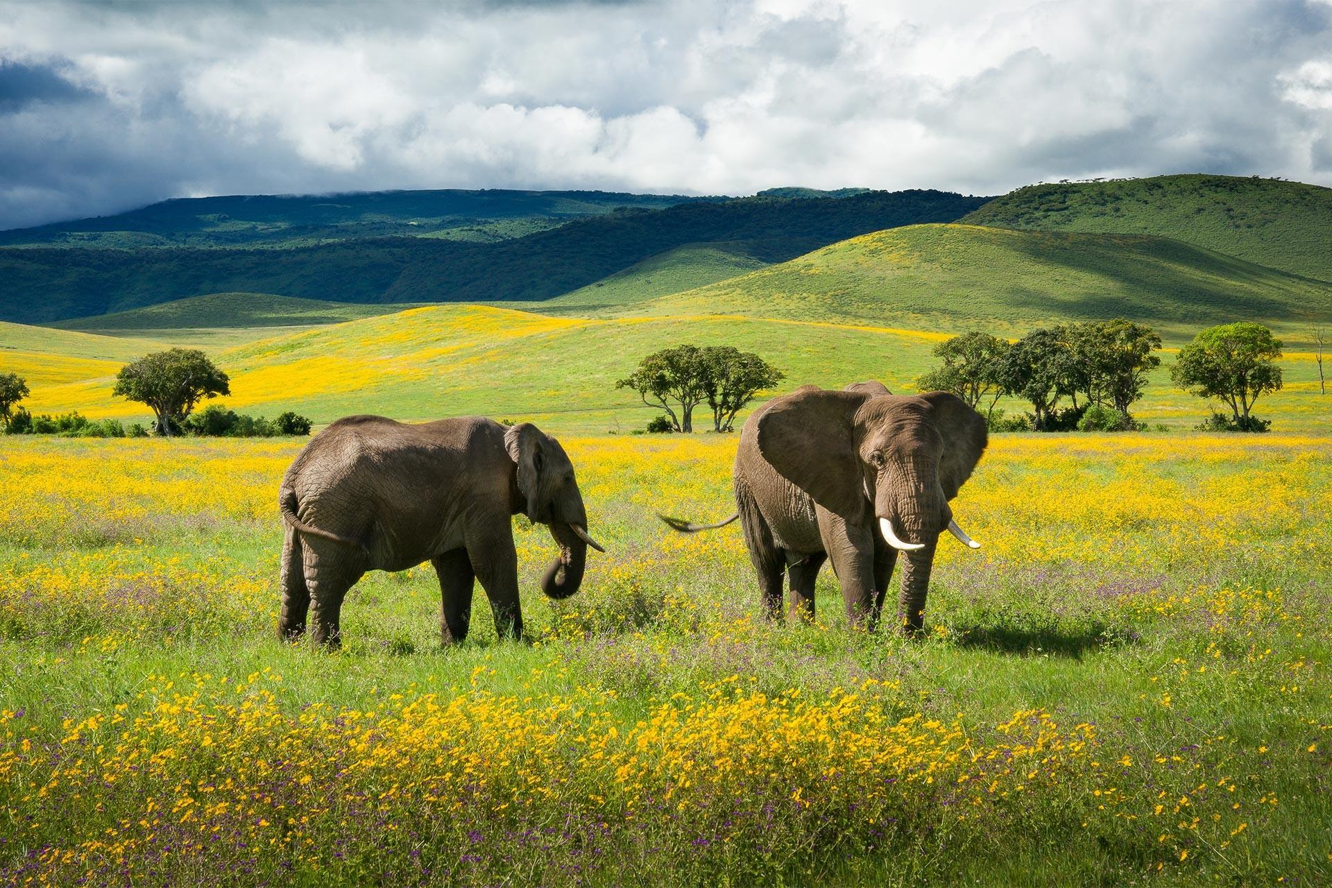 Share a Trip - Safari Tanzania, 12 zile