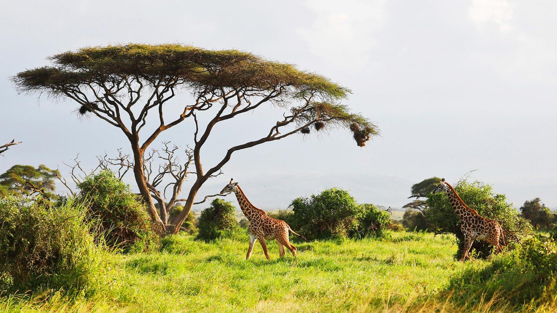 Share a Trip Charter Kenya - Safari Tsavo & plaja Diani Beach, 9 zile - iulie 2021